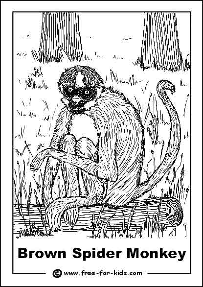 Preview of Endangered Brown Spider Monkey Colouring Sheet