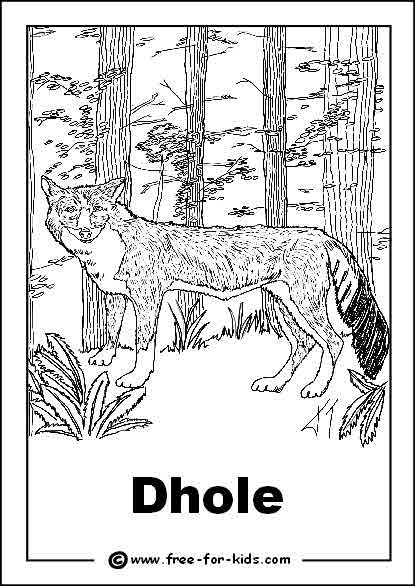 Preview of Endangered Dhole Colouring Sheet