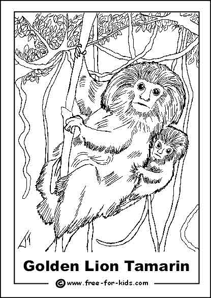 Preview of Endangered Golden Lion Tamarin Colouring Sheet