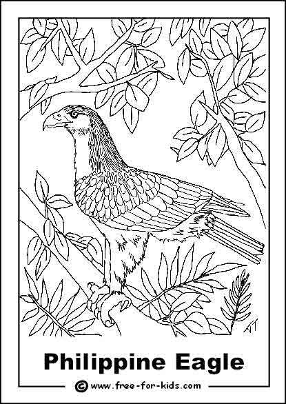 Preview of Endangered Philippine Eagle Colouring Sheet