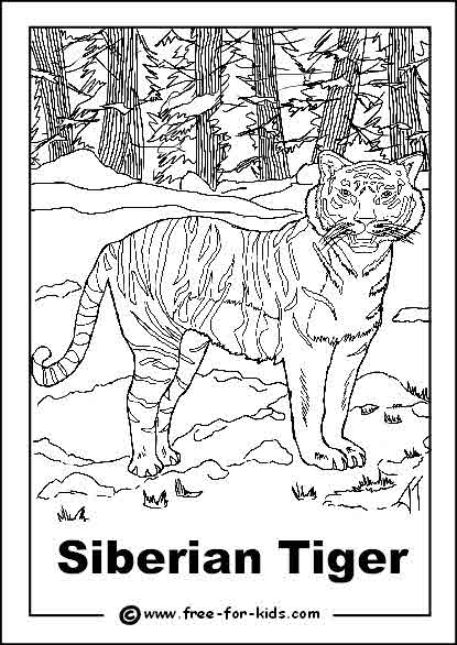 Preview of Endangered Siberian Tiger Colouring Sheet