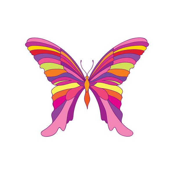 rainbow coloured butterfly