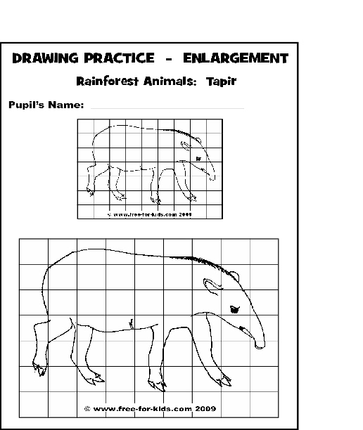 Preview of Rainforest Animal Drawing Practice Page - Tapir