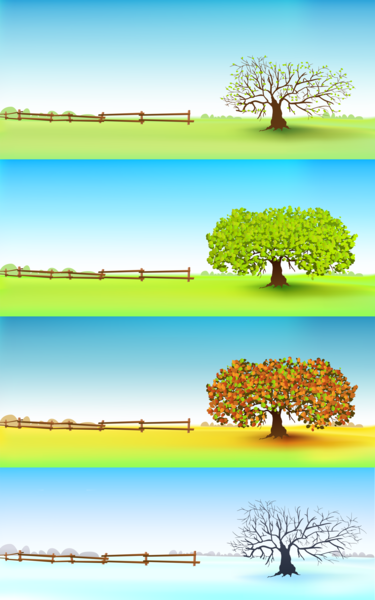 Four Trees in a field showing the four seasons