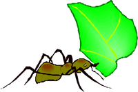 image of a leafcutter ant carrying a leaf