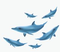 image of a school of dolphins
