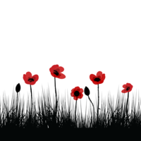 image of poppies in a field for remembrance day