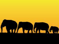 image of elephants walking in a line in silhouette
